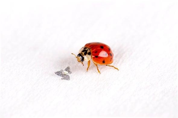Winged Microchips Glide like Tree Seeds