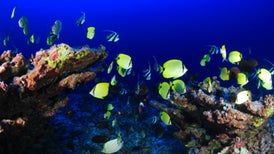 Ocean Species Set for Reshuffle Unseen in 3 Million Years