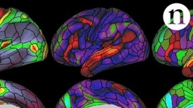 Scientists Map Nearly 200 Areas in the Human Brain