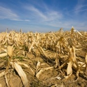 Extreme Weather May Raise Toxin Levels in Food, Scientists Warn