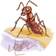 Signaling Science: What Household Solutions Repel Ants?