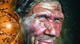 Neandertal Face Shape Was All Over the Air