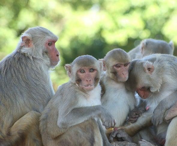 Made Ya Look, Monkey