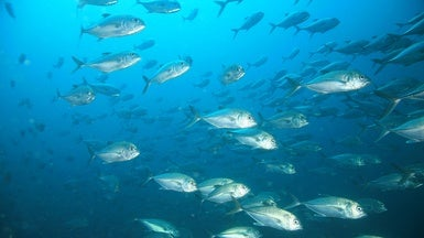 Warming Waters Could Mean Smaller Fish