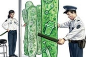Life from a Test Tube? The Real Promise of Synthetic Biology