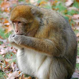 Calorie Restriction Fails to Lengthen Life Span in Primates