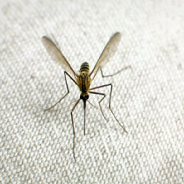 Researchers Turn to Supercomputing to Find Malaria's Soft Spot