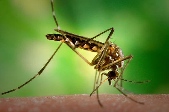 Mosquitoes Will Save Us All ... from Mosquitoes