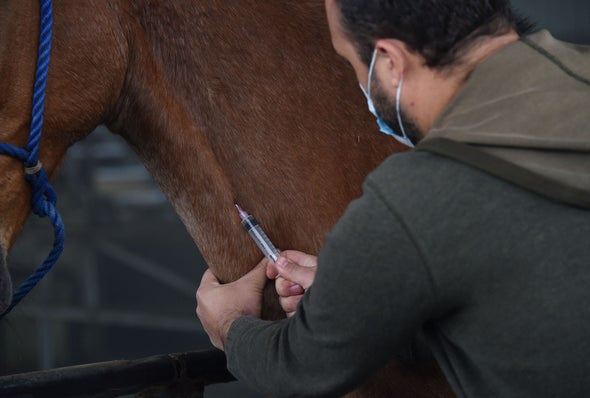 Costa Rica Readies Horse Antibodies for Trials as an Inexpensive COVID-19 Therapy