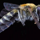 01. Polyester Bees