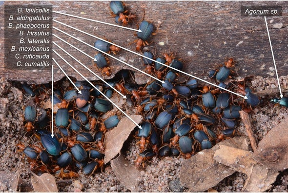 Daylight Brings Toxic Beetles Together for Safety