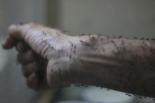 Obama Calls for Rapid Zika Virus Research