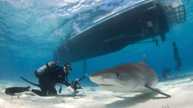 Shark Riders Pose Threat to Conservation Gains Made with Diving Ecotourism [Slide Show]