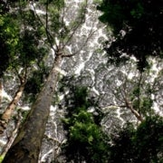 Rebirth Control: Lessons Learned from 90 Years of Rainforest Regeneration [Slide Show]