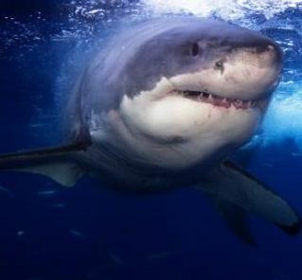 Fed Seeks Greater Protection for Sharks