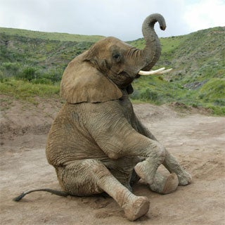 Is EBay Doing Enough to Stop Illegal Ivory Sales on  Its Site?