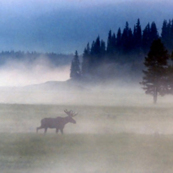Rapid Climate Changes Turn North Woods into Moose Graveyard