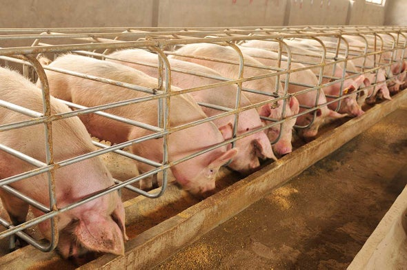 Antibiotic Use in Food Animals Continues to Rise
