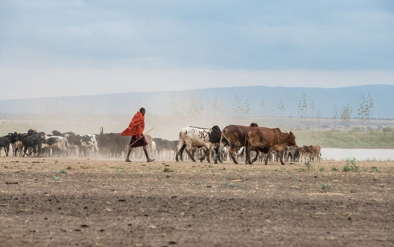 More Grazing Leads to Fewer Fires in the Serengeti