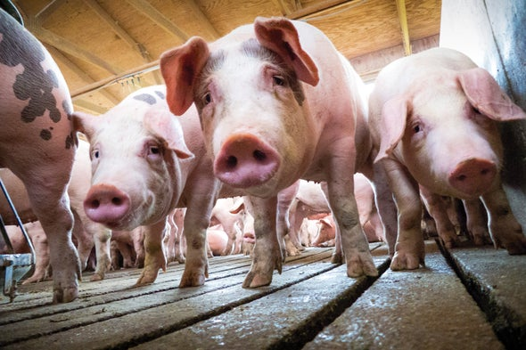 How Drug-Resistant Bacteria Travel from the Farm to Your Table