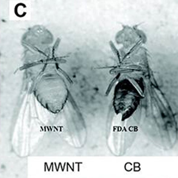 Carbon Nanomaterials: Fine for Fly Food, Bad for Fly Coating