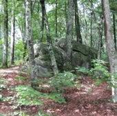 HOT SPOT LOSER: DECIDUOUS FOREST