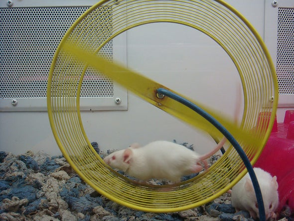Blind Mice Cured by Running