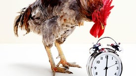 Nobel in Physiology or Medicine for Our Inner Clocks