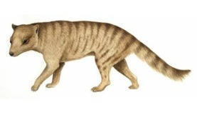 illustration of a dog-like beige animal with brown stripes and a rodent-like face