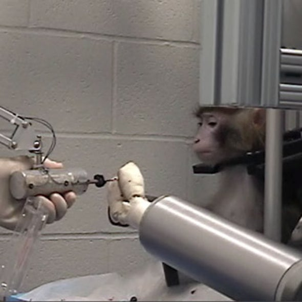 Monkey Think, Monkey Do--With a Robotic Arm [Video]