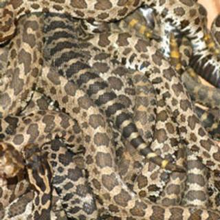 Endangering Species: Listing Can Make Animals Valuable Black Market Commodities [Slide Show]