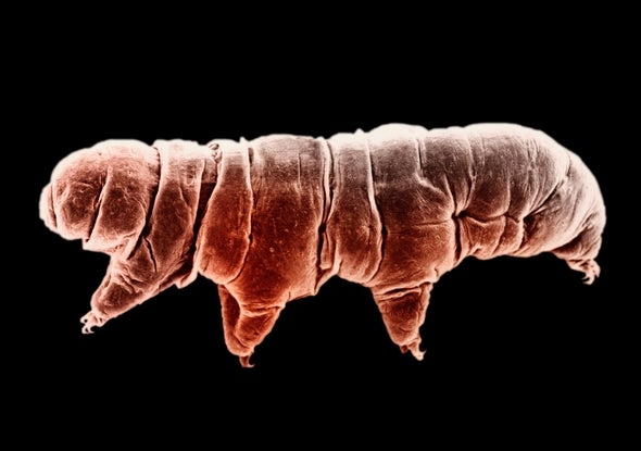 Tardigrade Protein Helps Human DNA Withstand Radiation