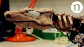 Bringing a Fossil to Life: Reverse Engineering Locomotion