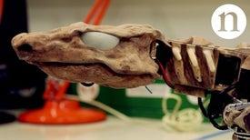 将化石复活:逆向工程运动