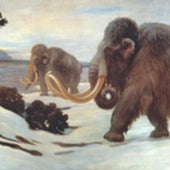 HERD OF WOOLLY MAMMOTHS and reindeer in Ice Age France