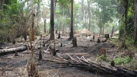 Africa's Congo Could Lose Vast Forests