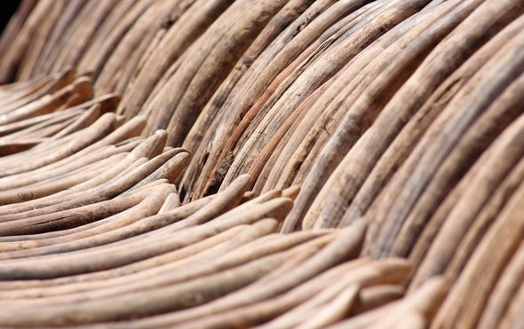 China to Ban Domestic Ivory Trade by End of 2017