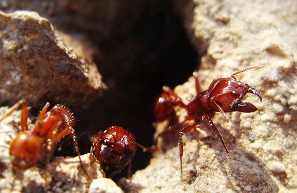 Decoding the Remarkable Algorithms of Ants