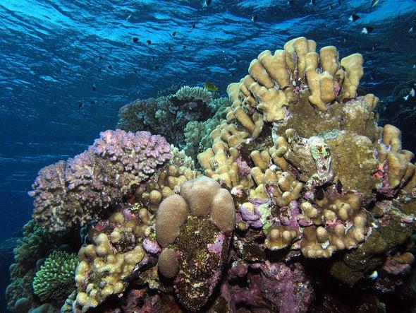 Earliest Skeletal Animals Built Reefs