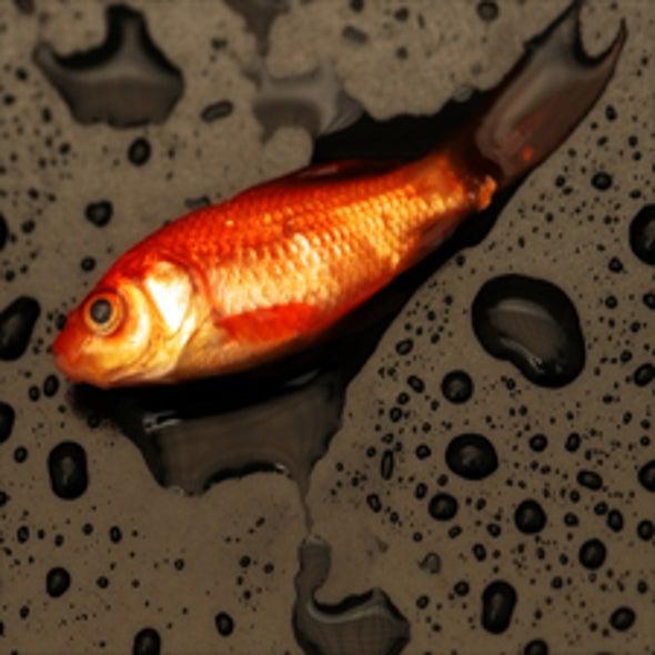 Fish Kill: Nanosilver Mutates Fish Embryos