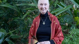 Jane Goodall: We Can Learn from This Pandemic