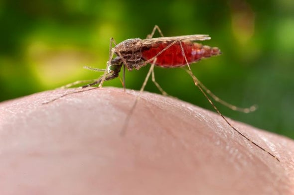Malaria Treatments Are Not Working Well