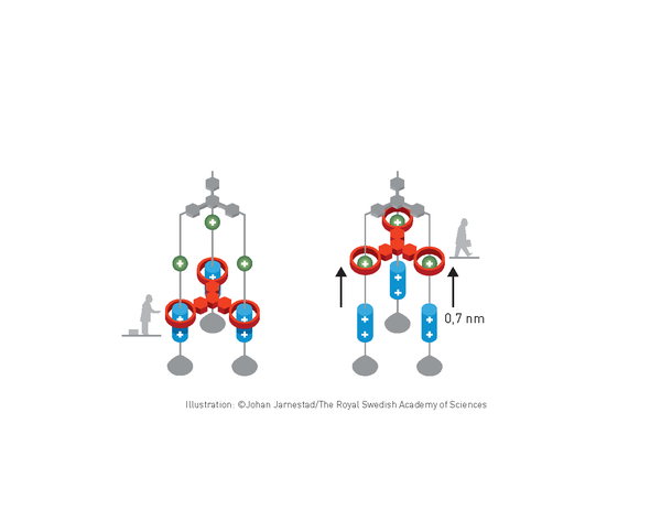 Molecular Machine-Makers Grab the 2016 Nobel Prize in Chemistry