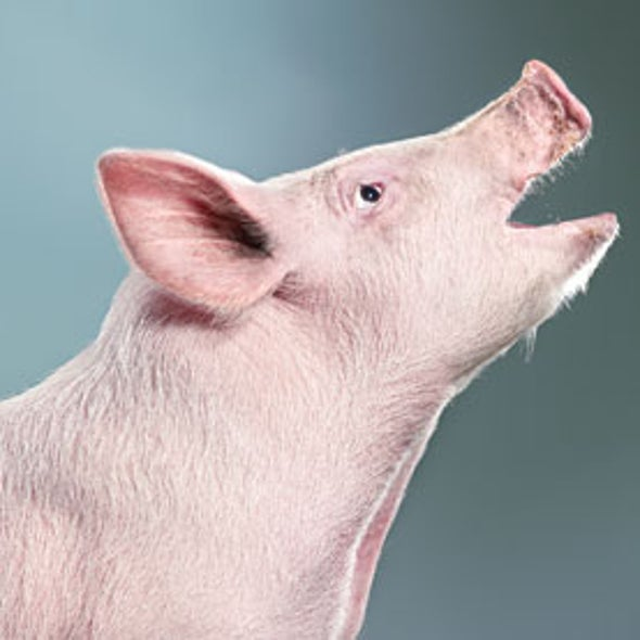 Our Big Pig Problem