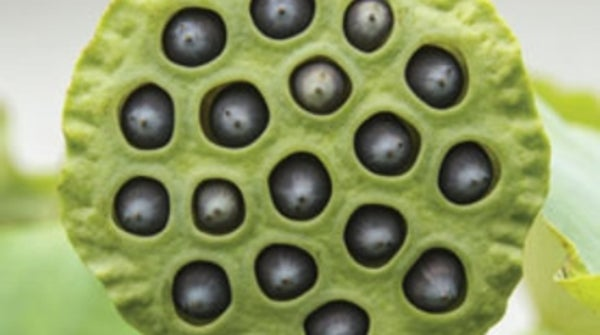 Are you afraid of holes scientific american mightylinksfo Image collections