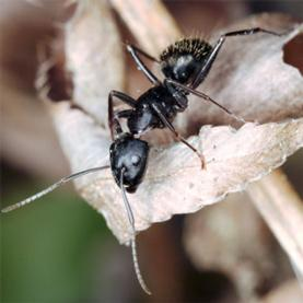 The School of Ants