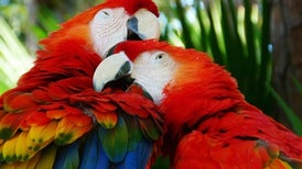 """Prehistoric Americans May Have Farmed Macaws in """"Feather Factories"""""""