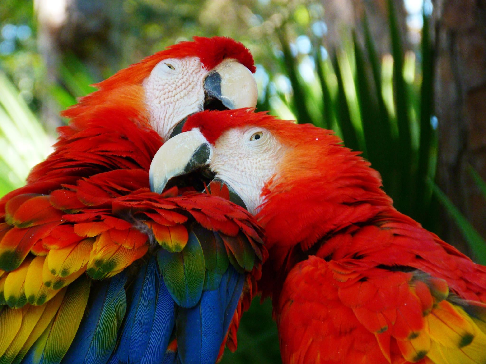 Prehistoric Americans May Have Farmed Macaws in