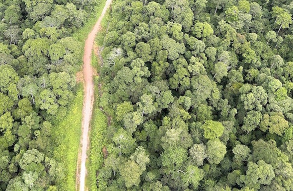 New African Highways Have a High Environmental Price