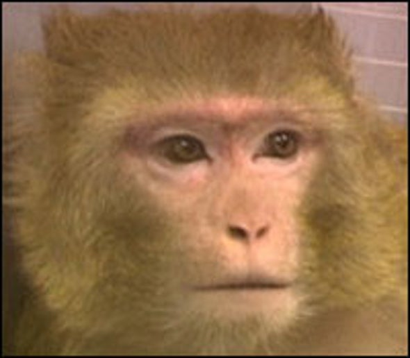 Gender Gap in Monkey Cognition Closes with Training, Age